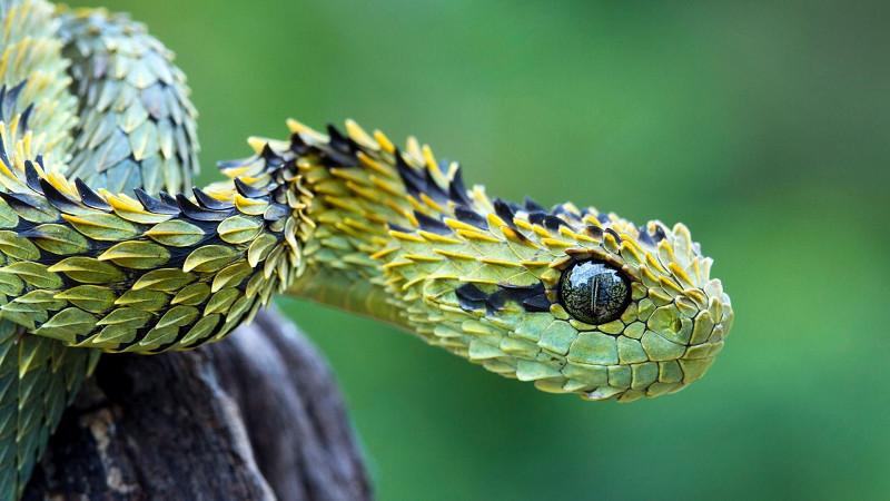 Con rắn số mấy? Mơ thấy rắn đánh đề con gì?