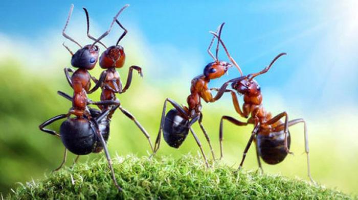 Con kiến số mấy? Mơ thấy con kiến đánh đề con gì chuẩn?