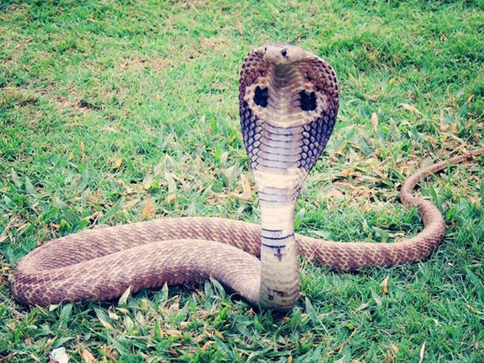 [Hỏi Đáp] Gặp rắn ngoài đường đánh con gì?