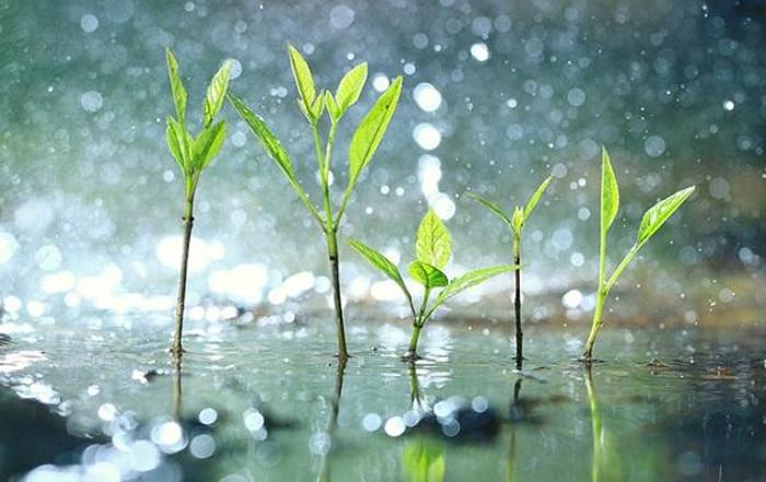 Giải mã giấc mơ thấy trời mưa đánh đề con gì?