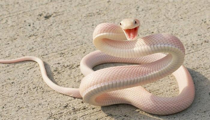 Mơ thấy rắn trắng đánh đề con gì chuẩn?